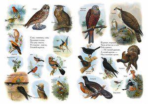 Seznamy ptáků z encyklopedie