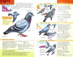 Nomadské ptáky