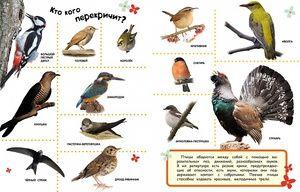 Které ptáky neleží do teplých zemí