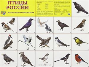 Ptáci na území Ruska