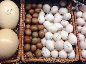 Kolik ukládáme vejce