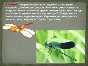 Jak vážky žijí