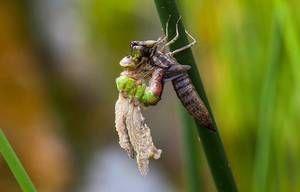 Jak a co má vážka jíst