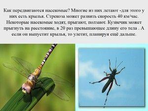 Dragonfly je hmyz