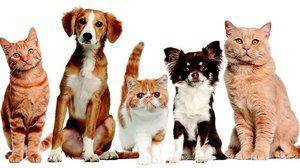 Léčivo pro léčbu zvířat