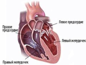 Srdce se skládá z atriů a komor, které plní své funkce