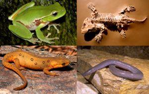 Evoluce dala každému druhu nejúčinnější strukturu