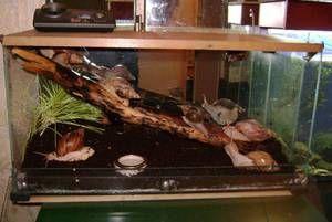 Základní výživa hlemýžďů ahatin