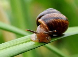 Co se líši od hmyzu