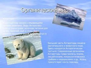 Unikátní zvířecí svět v Antarktidě