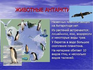 Unikátní zvířata z Antarktidy