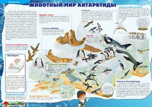Jaká zvířata v Antarktidě