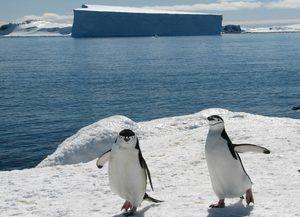 Tučňáci v Antarktidě