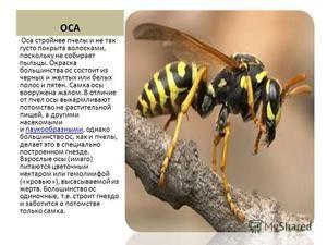 Sting včel