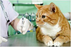Vakcína pro kočky