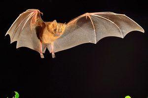 Kde žijí netopýři?
