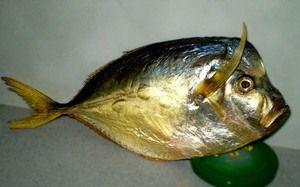 Které ryby mají plochý tvar