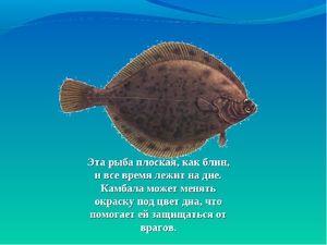 Vlastnosti plochých ryb