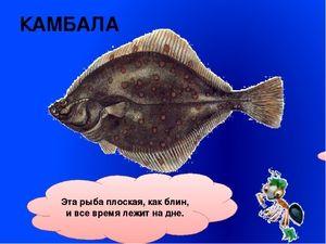 Ploché a kulaté ryby
