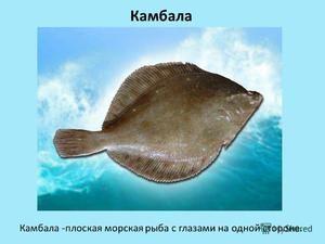 Ryby v přírodě