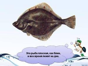 Popis plochých ryb