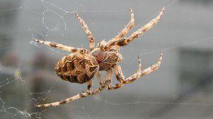 Spider a jeho struktura