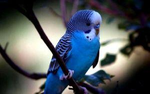Kolik žije papoušek
