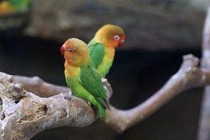 Co ovlivňuje očekávanou délku života papouška