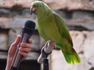 Schopnost učit papouška