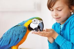 Láskavé ošetření papoušků