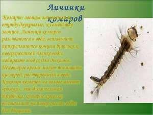 Kdo se živí larvy komárů