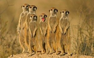Popis pouštních zvířat